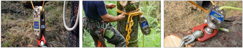 arborist rigging